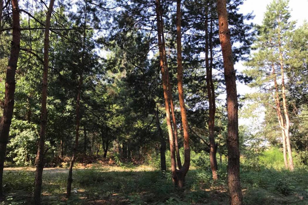 Продажа земельных участков в Кировском (обуховка) - Фото 2
