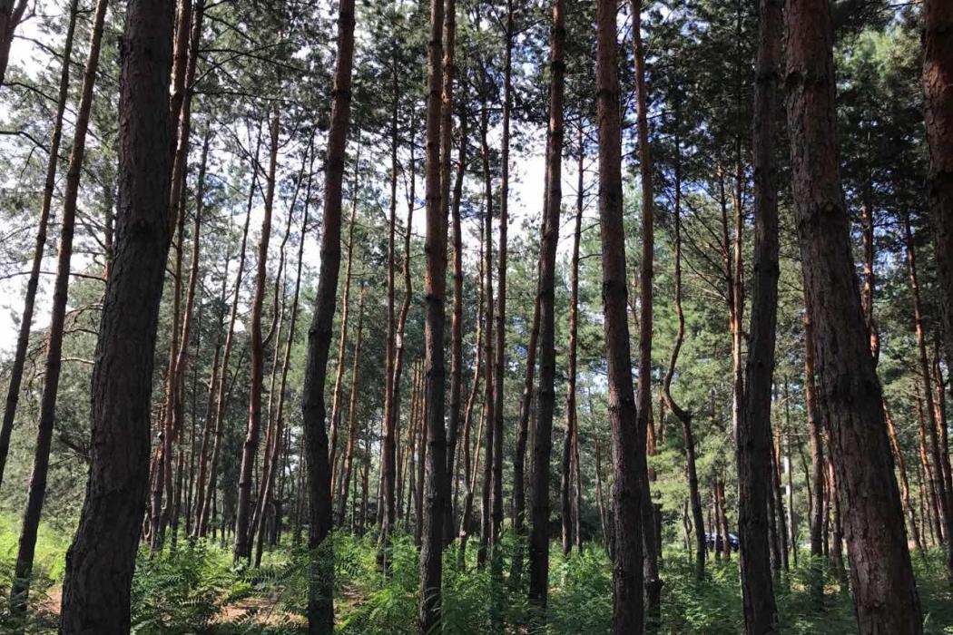 Продажа земельных участков в Кировском (обуховка) - Фото 3