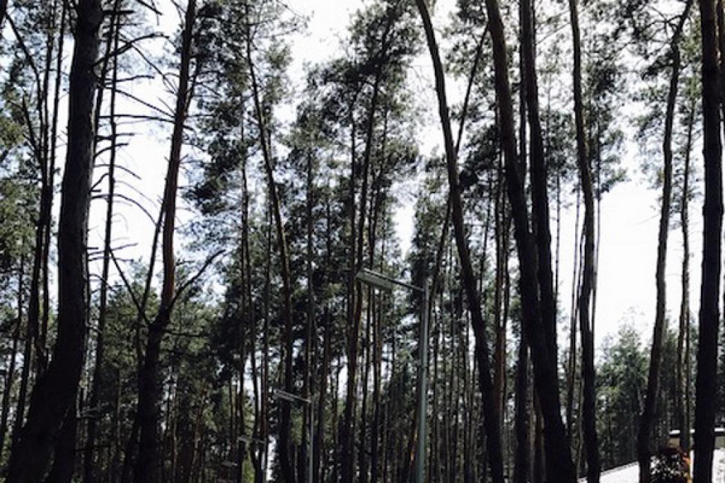 Продается идеальный участок в с.Песчанка 10 соток в лесу - Фото 1