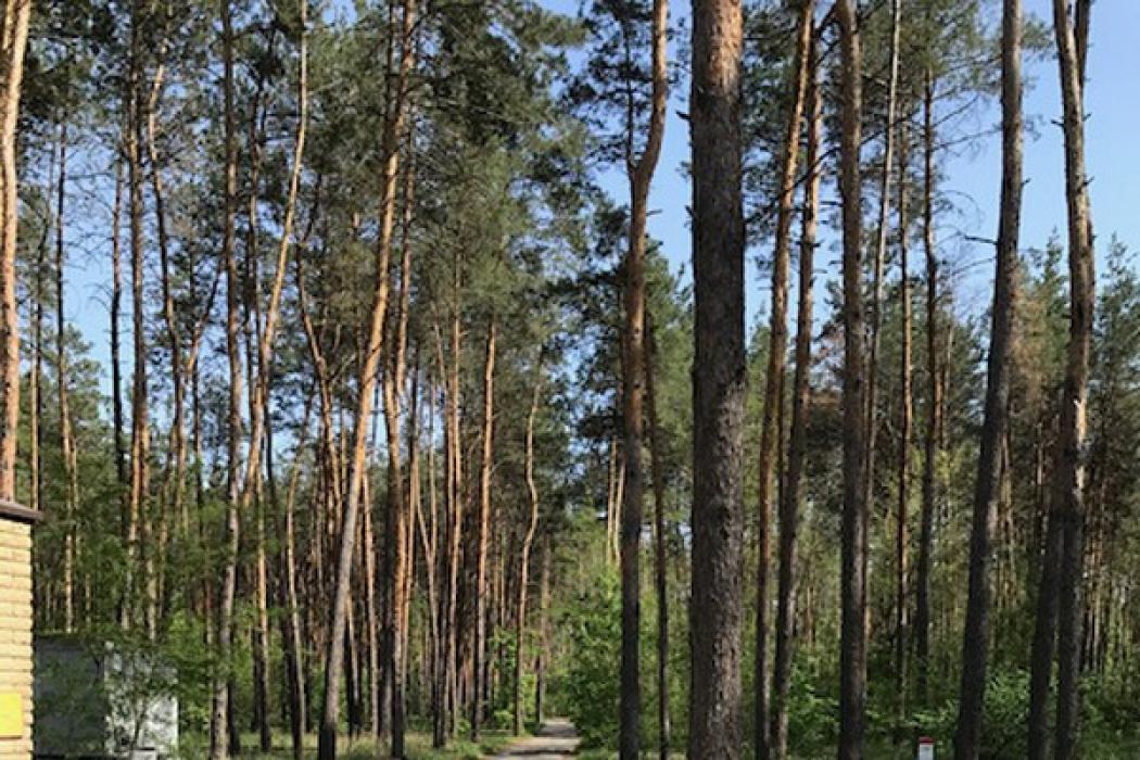 Продается идеальный участок в с.Песчанка 10 соток в лесу - Фото 3