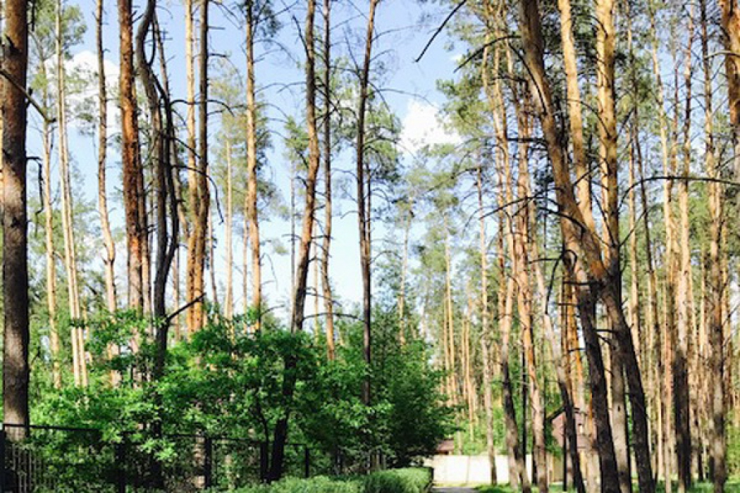 Продается идеальный участок в с.Песчанка 22 сотки в лесу - Фото 4